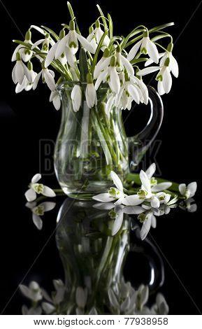 bouquet of primroses, snowdrops white