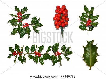 Christmas Holly Collection