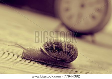 a land snail and an old desktop clock on a wooden table, in sepia tone