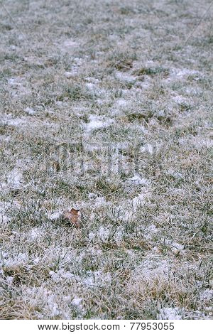 First Snow On The Grass