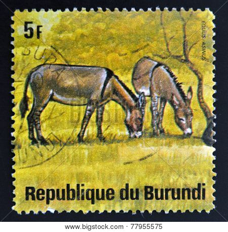 BURUNDI - CIRCA 1964: A stamp printed in Burundi shows equus asinus wild animal circa 1964.