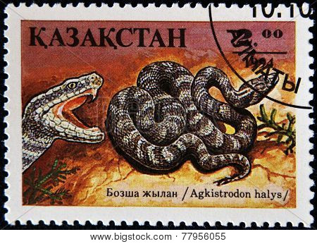 KAZAKHSTAN - CIRCA 1994: A post stamp printed in Kazakhstan shows Siberian pit viper agkistrodon