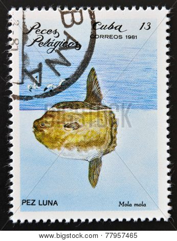 CUBA - CIRCA 1981: A Stamp printed in Cuba shows a Ocean Sunfish with the inscription