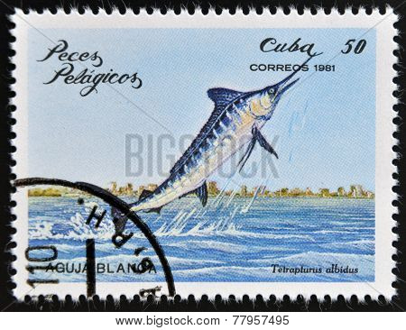 CUBA - CIRCA 1981: A Stamp printed in Cuba shows a white marlin
