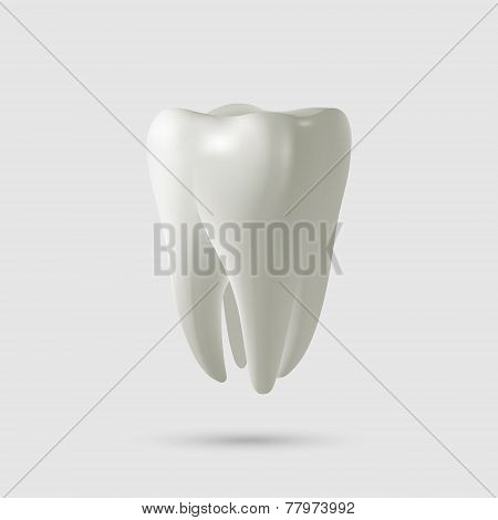 Tooth Isolated On White. Vector Illustration.