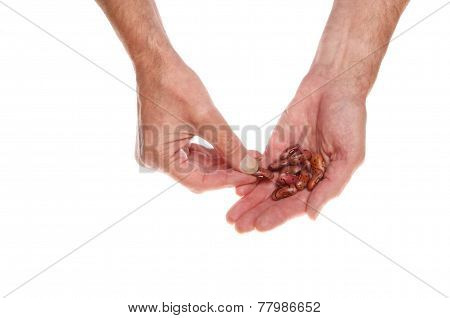 Bean Seeds In Hand