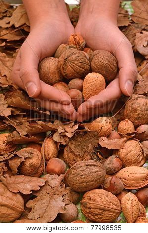 A Special Offer Of Walnuts, Almonds And Hazelnuts