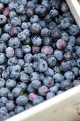 image of pick up  - Close up of a box full of freshly picked blueberries - JPG