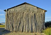 stock photo of tobacco barn  - Detail of an old tobacco farm facade - JPG