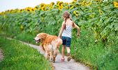 image of girl walking away  - little girl walks on the leash with a golden retriever - JPG