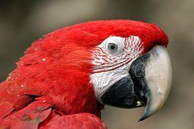 foto of green-winged macaw  - Green - JPG
