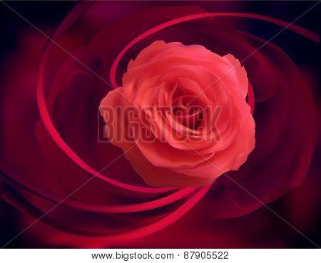 illustration with rose flower on dark background