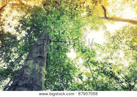 Forest trees ( Filtered image processed vintage effect. )