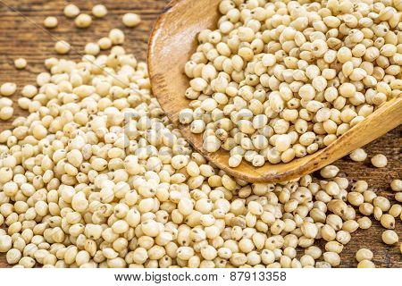 healthy, gluten free, white sorghum grain on a rustic wooden scoop
