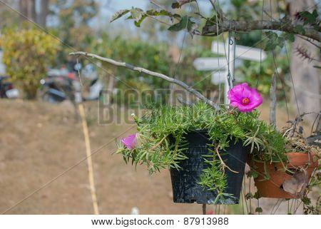 Pink flower in flowerpot