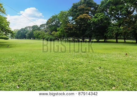 Landscape Lawn In The Park