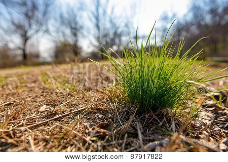 Tuft Of Grass In The Autumn