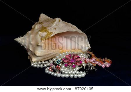 Jewelry and women's jewelry in seashell