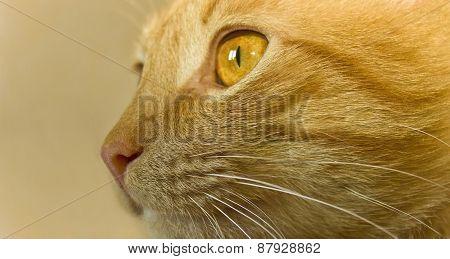 Carroty Cat