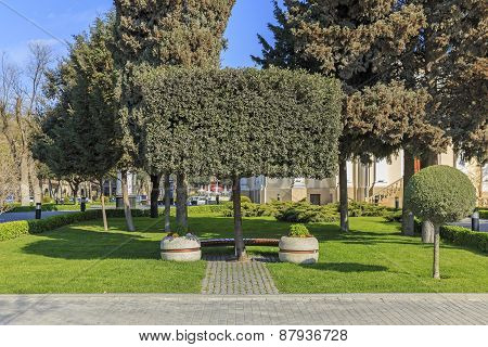 The Original Tree And A Bench On The Boulevard In Baku