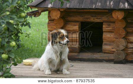 Dog Near Wake