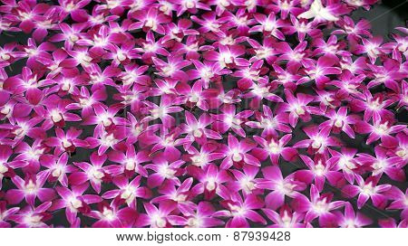 Purple Orchid Floating In Water Abstract Spa And Relaxation
