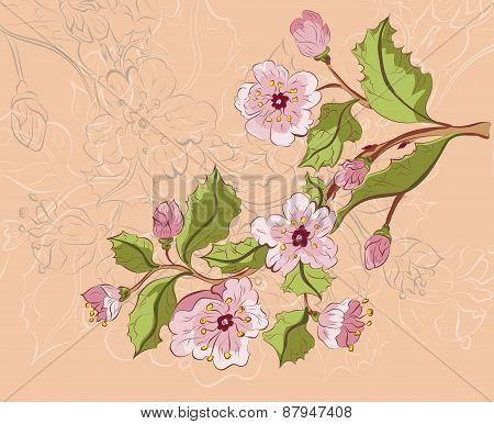 Colored Sketch Of Sakura Branch
