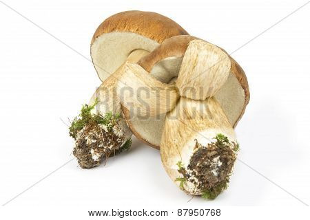 Two Boletus Edulis Mushrooms