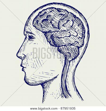 Human brain and head
