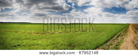 Panorama Of A Country Road On The Edge Of A Field Of Wheat