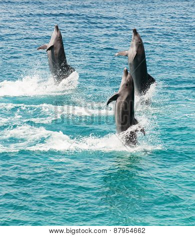Dolphins Walking