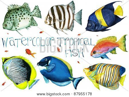 Watercolor hand drawn tropical fish on a white background