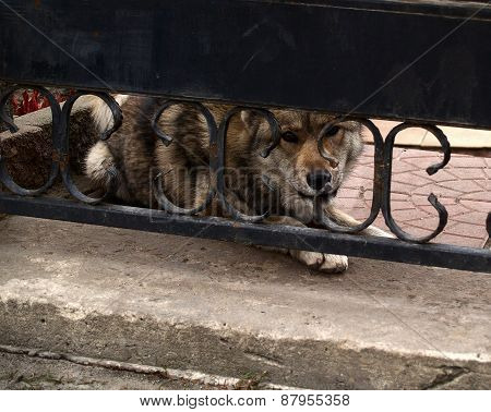 Dog - Reliable Guard