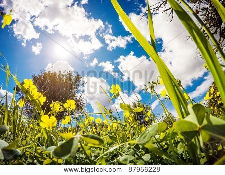 Fantastic views of the garden with blue sky. Mediterranean climate. Sicily island, Italy, Europe. Beauty world.