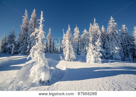 Majestic winter landscape glowing by sunlight. Dramatic wintry scene. Carpathian, Ukraine, Europe. Beauty world. Happy New Year!