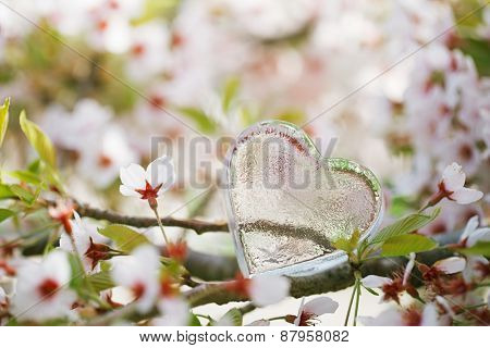glass clear heart in Spring with blossom cherry flower sakura