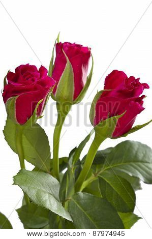 Red roses bouquet. Still-life on a white background