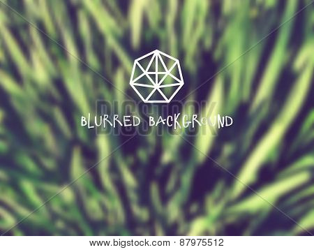 Abstract blurred natural background