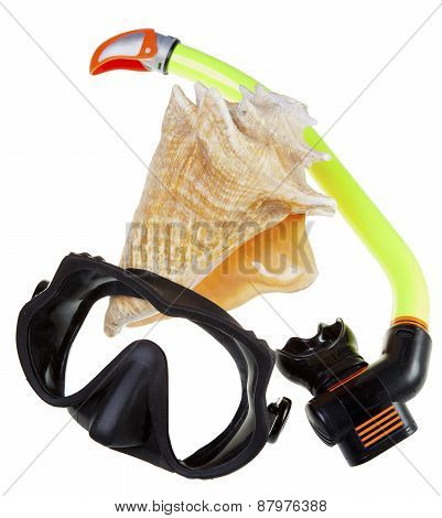 Tube for diving (snorkel) big sea shell and mask