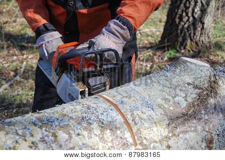 Chainsawing A Tree Trunk