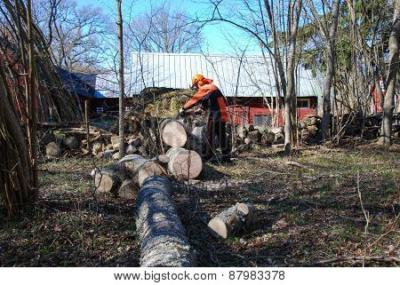Worker Cuts A Wind Fallen Tree