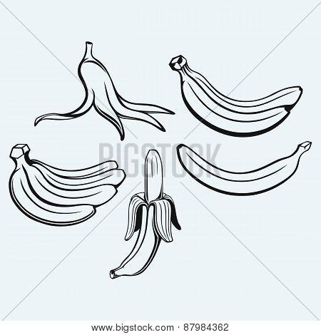 Bunch of bananas, peeled banana and banana peel