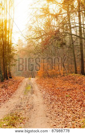 Country Road In The Forest On Sunny Day