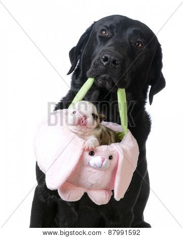 dog holding a basket with a puppy inside on white background