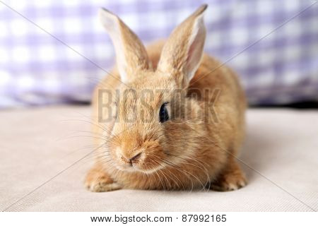 Cute rabbit on sofa, close up