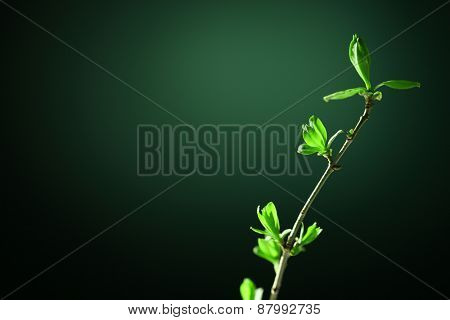 Young foliage on twig, on green background