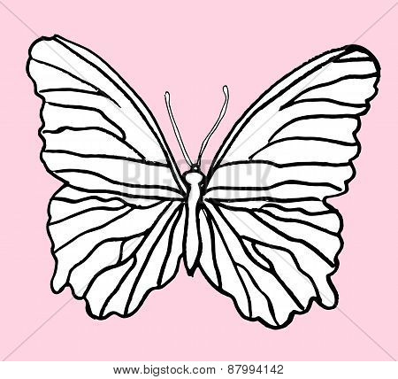 Hand drawn butterfly
