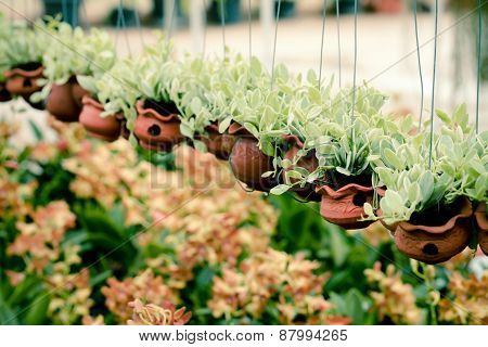 Dave planted in clay pots. The Orchid Garden Style Vintage