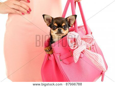 Woman carrying cute chihuahua puppy in pink bag, closeup