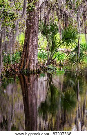 Magnolia Plantation Swamp Garden